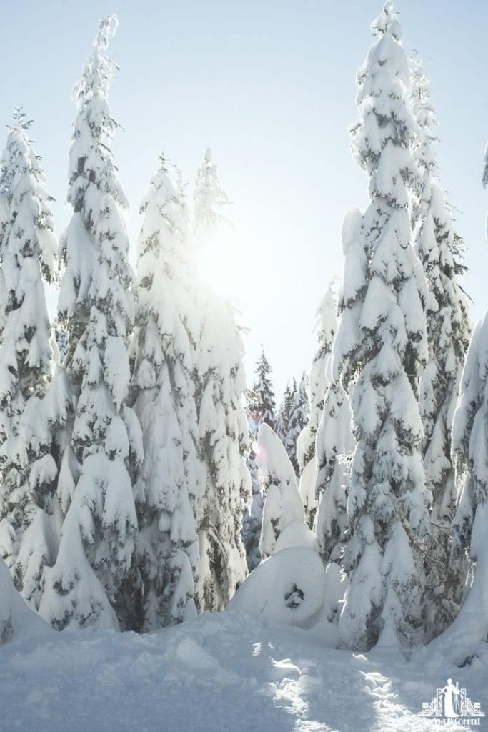 Image of the sun back-lighting snow covered trees on Cypress Mountain in Vancouver