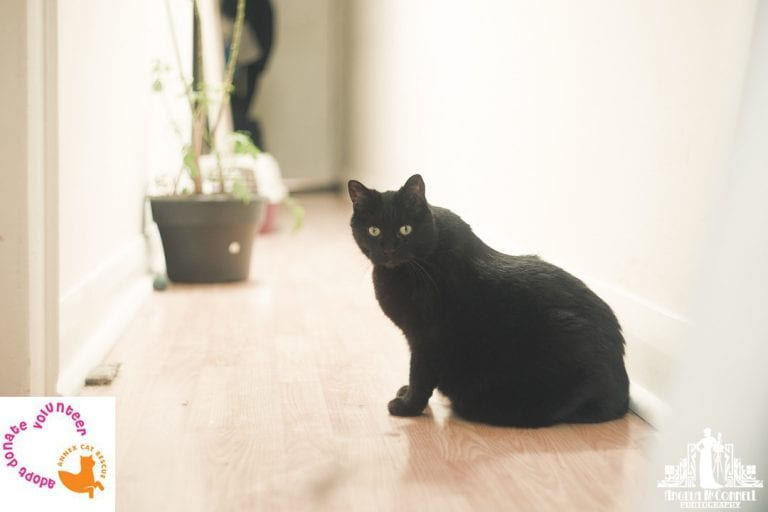 Natural light pet portrait of a black cat with green eyes sitting in a hallway