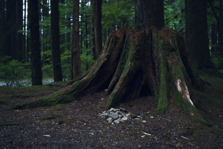 Stones placed in front of a moss covered tree stump in a forest while camping at Golden Ears Provincial Park