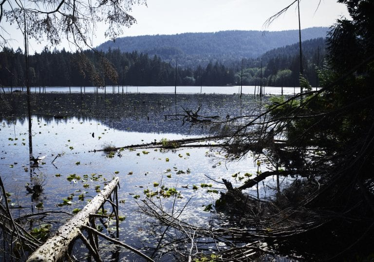 View of the wetlands from the Killarney Lake loop track during a Thanksgiving getaway on Bowen Island