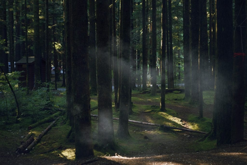 Campfire smoke being illuminated by sunlight through the trees in a forest while camping at Golden Ears Provincial Park