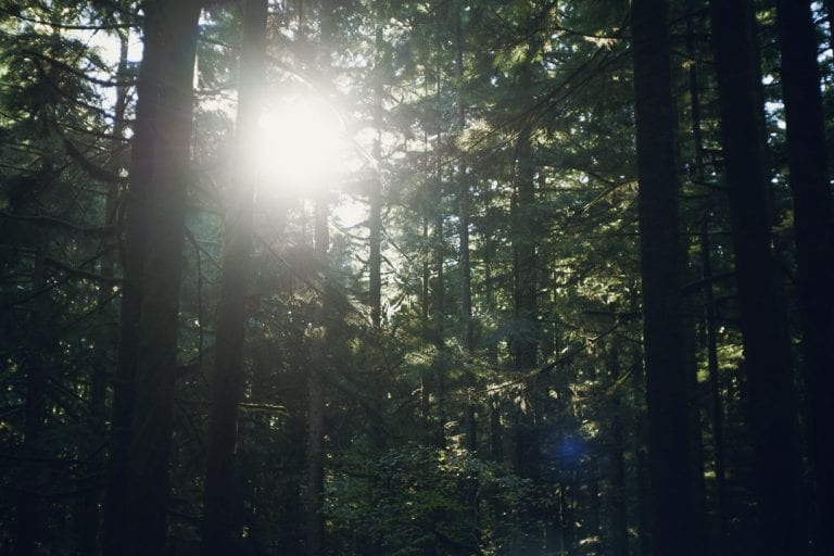 Sunlight filtering through the trees in a forest while camping at Golden Ears Provincial Park