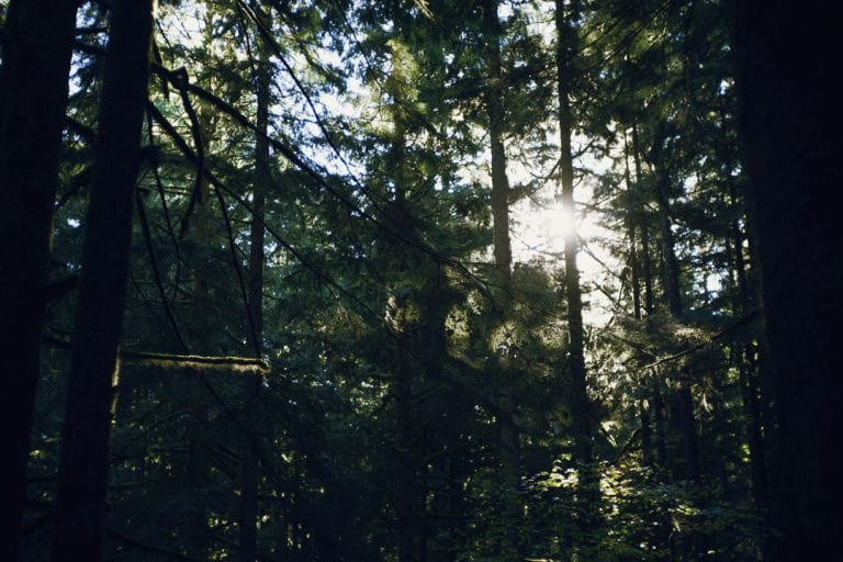 Sunlight shining through the trees in a campground at Golden Ears Provincial Park
