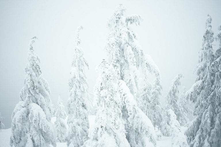 Foggy view from lookout at the top of Dog Mountain with snow covered trees during snowshoeing in Vancouver, BC