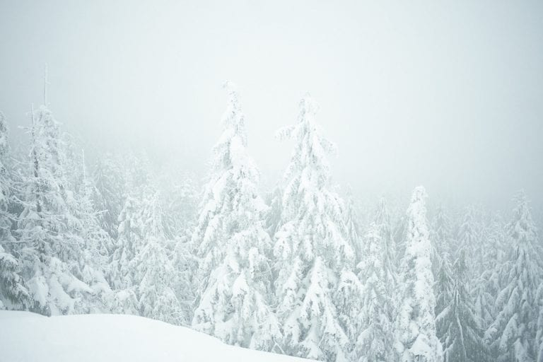Foggy view from Dog Mountain lookout with snow covered trees during snowshoeing in Vancouver, BC