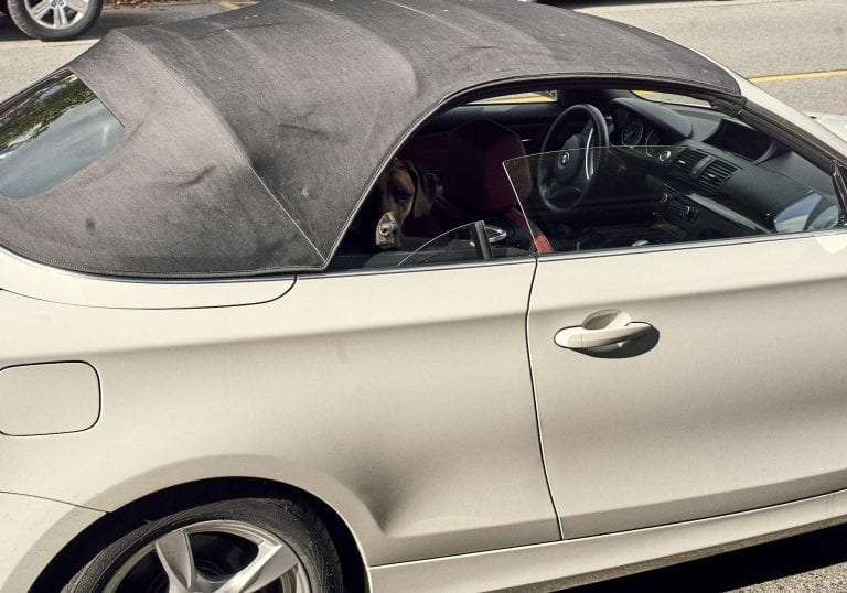 Image of a dog in a white soft top convertible car waiting for it owner