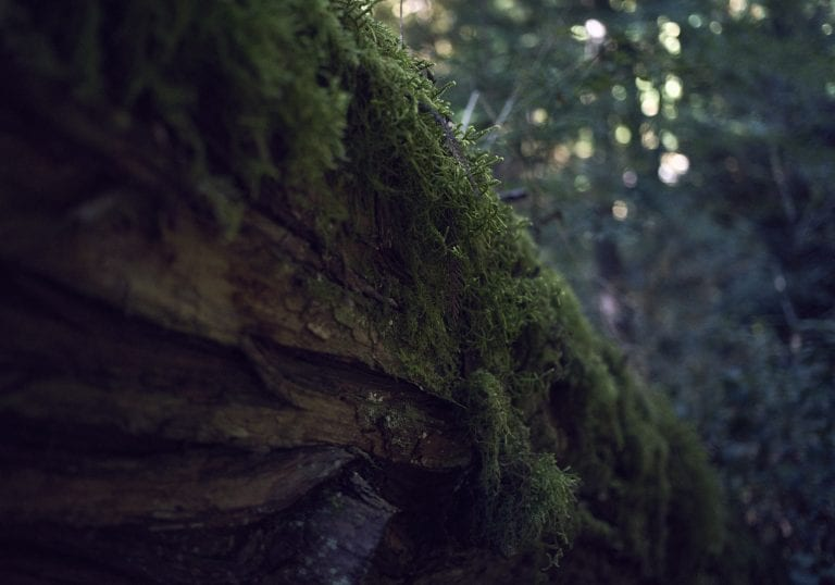 Image of moss growing on the side of a fallen log