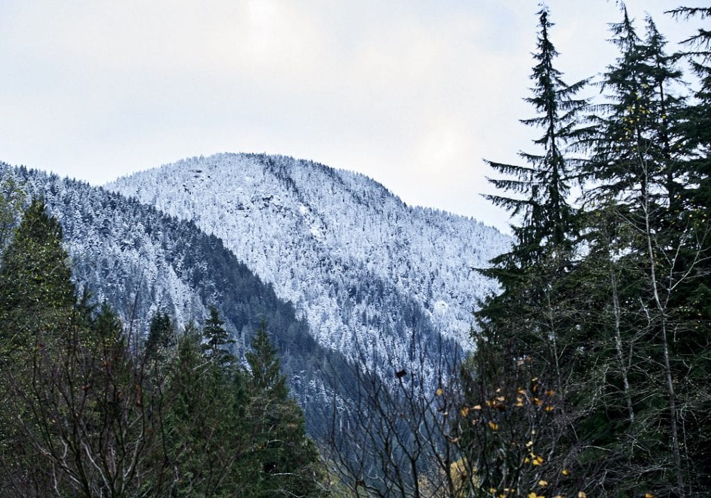 Snow covers the trees in the hills behind the Lynn Valley Canyon during a self care and fitness workshop by Vancouver workshop and retreat photographer Angela McConnell